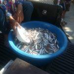 タイ・イサーン地方の村での魚売り