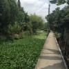 バンコク近郊・運河の路地散策