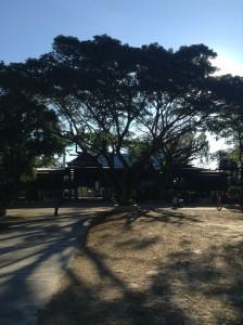 大きな木の向こうが本堂
