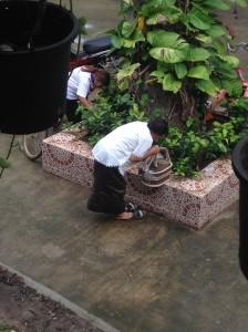 お水を植物に祈り唱えながら注ぎます