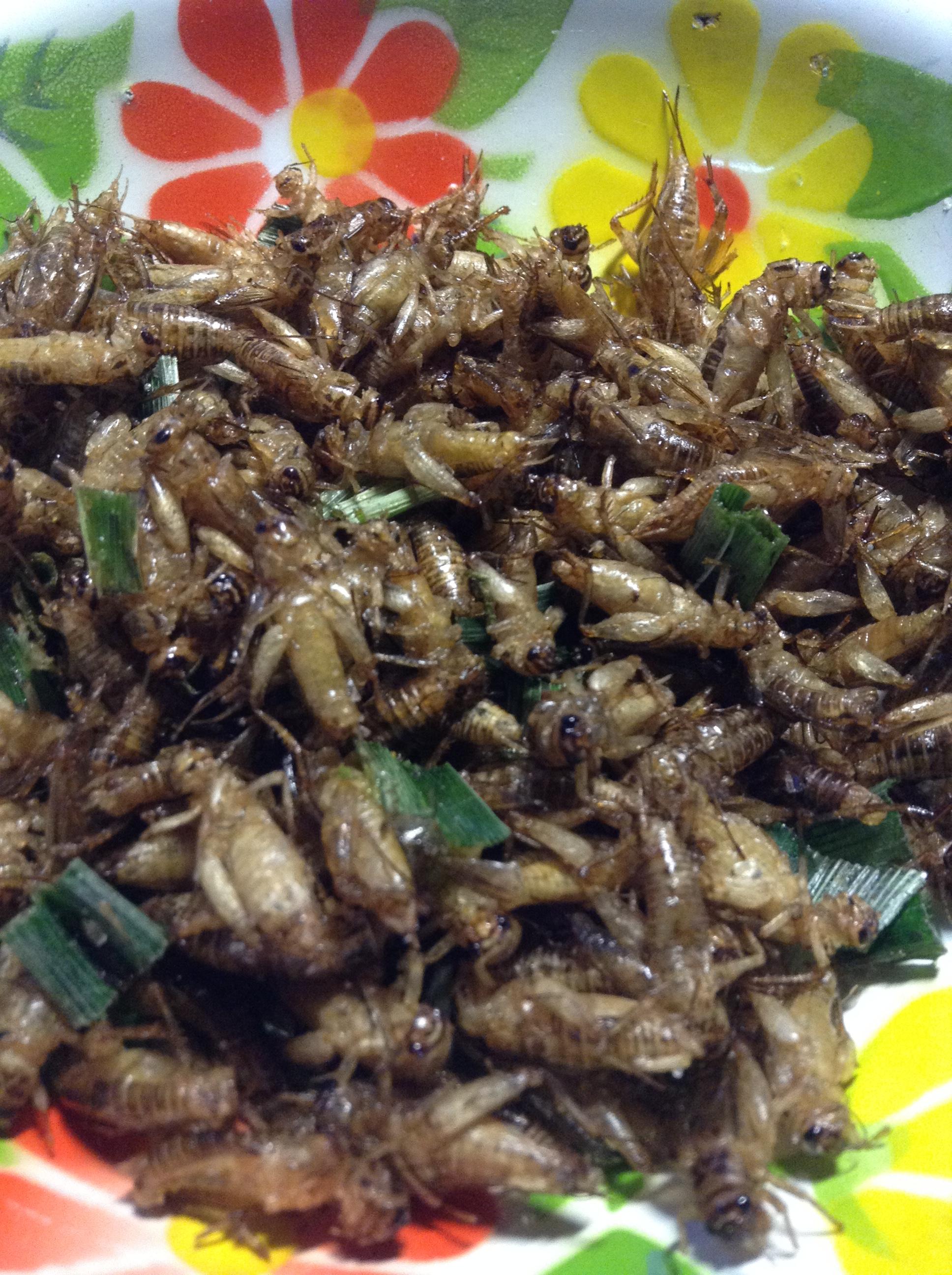 食用昆虫(コオロギ)
