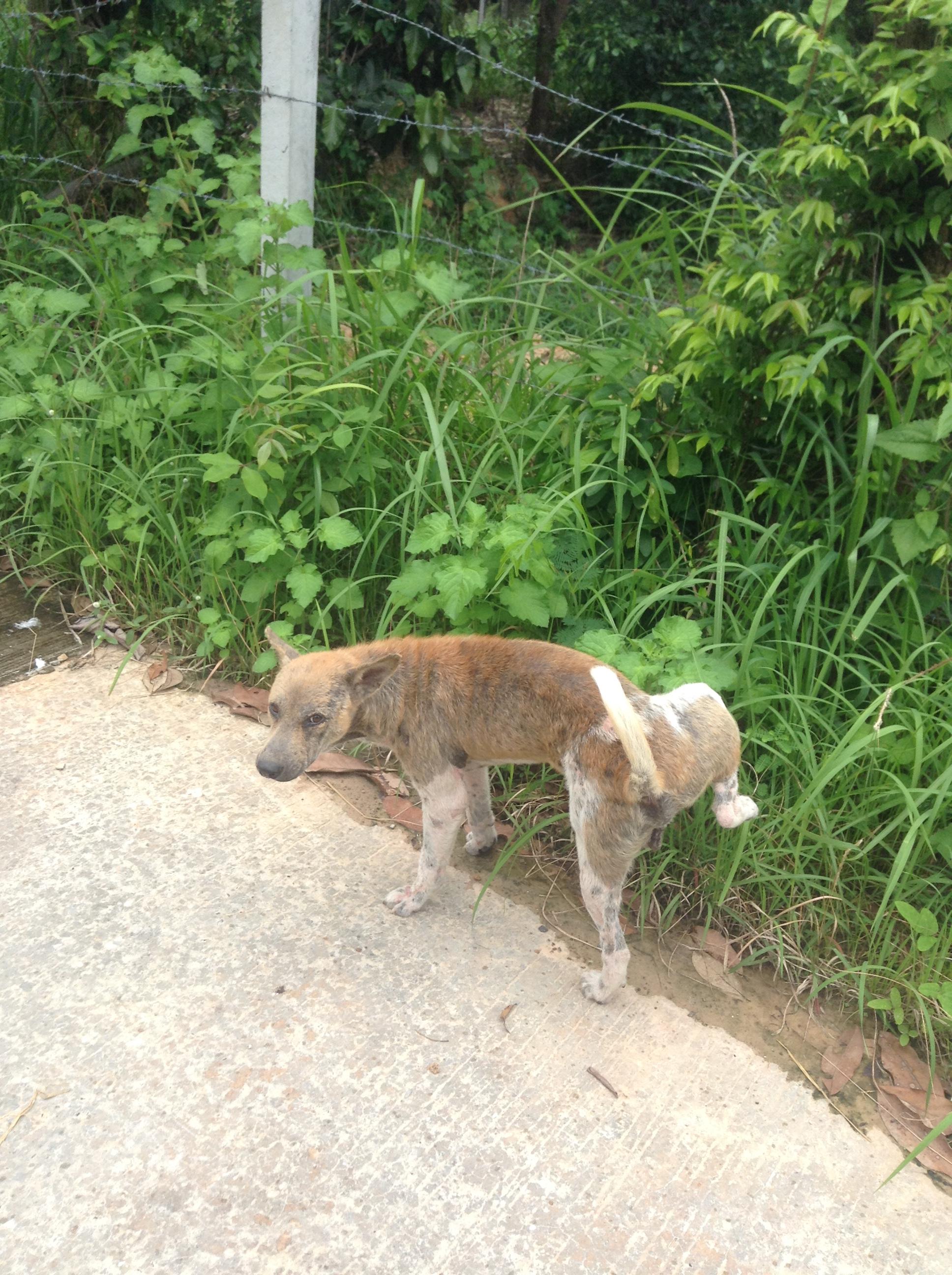 タイの田舎で飼われている犬は幸せ!?