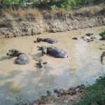 タイ東北部イサーン地方の農業用水路